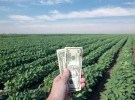 Soy field, crop, crop insurance, farm