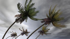 bigstock-palms-at-hurricane-12116309