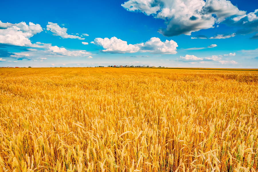 everest re will unload u s  crop insurance subsidiary