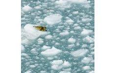 Global warming, climate change, environment, melting glacier