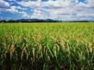 crop-insurance-150x150